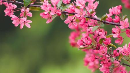 hero-cherry-blossom