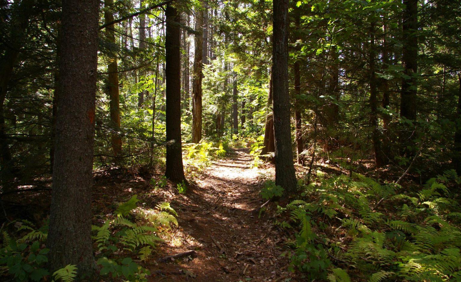 forest-walks-1536x940-1